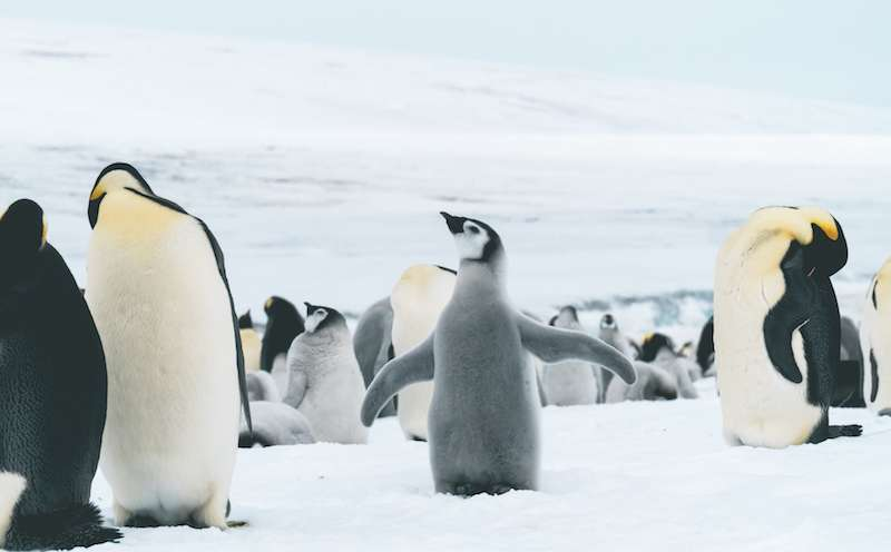 Film Antarktis