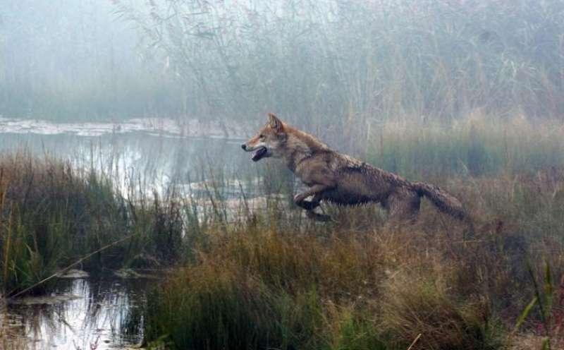 Der Letzte Wolf Kritik
