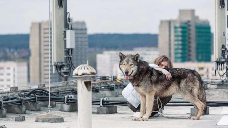 News 05042018 Der Wolf Im Wohnzimmer
